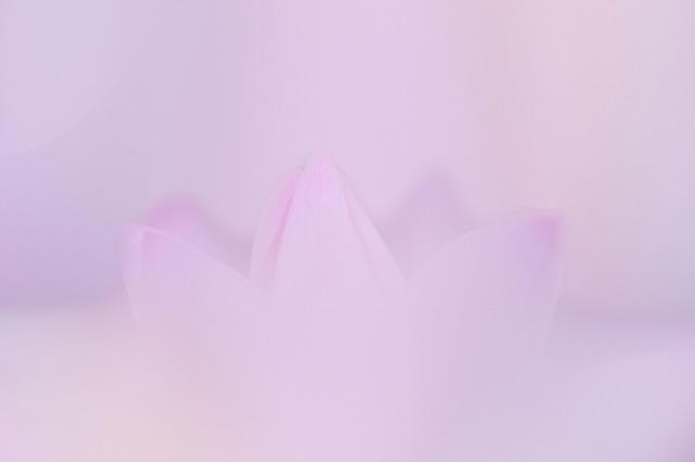 2P3A6111.jpg