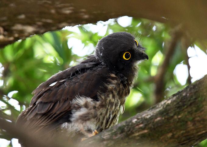 幼鳥0197