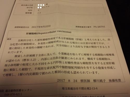 IMG_20170831_202627_Fotor.jpg