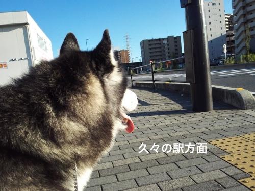 IMG_20170918_162637_Fotor.jpg