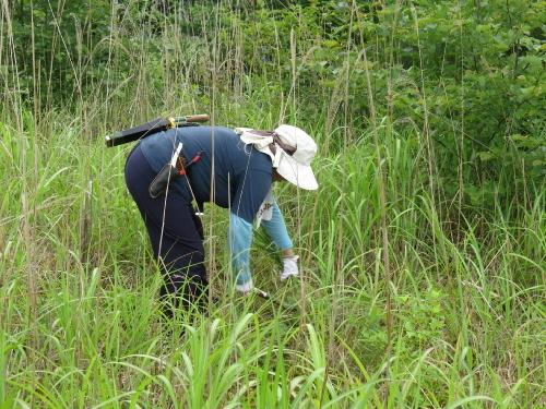 雑草の駆除1