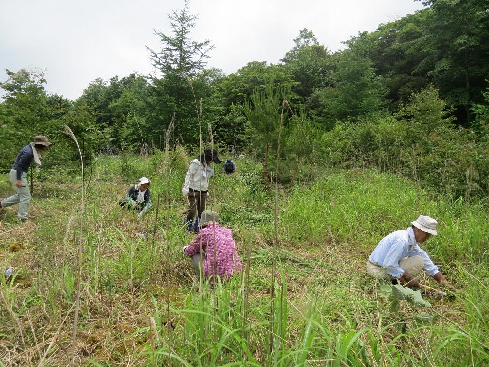 雑草の駆除2