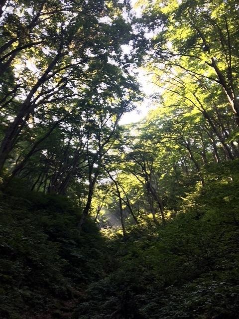 8-16 急坂の登山道