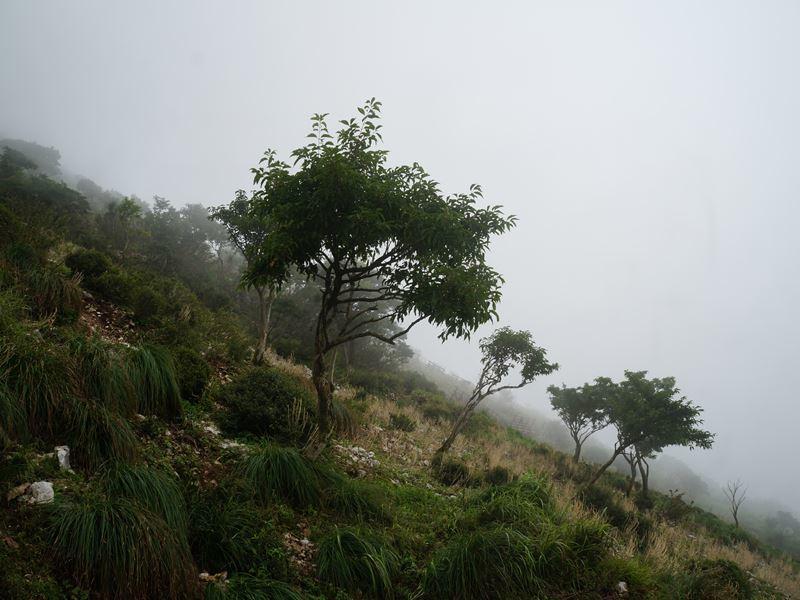 7合目の霧