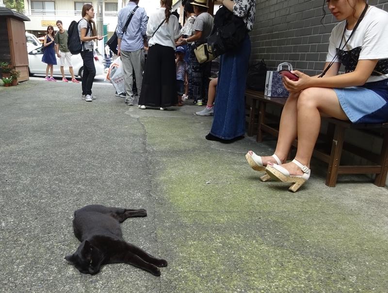 DSC09627眠りネコ