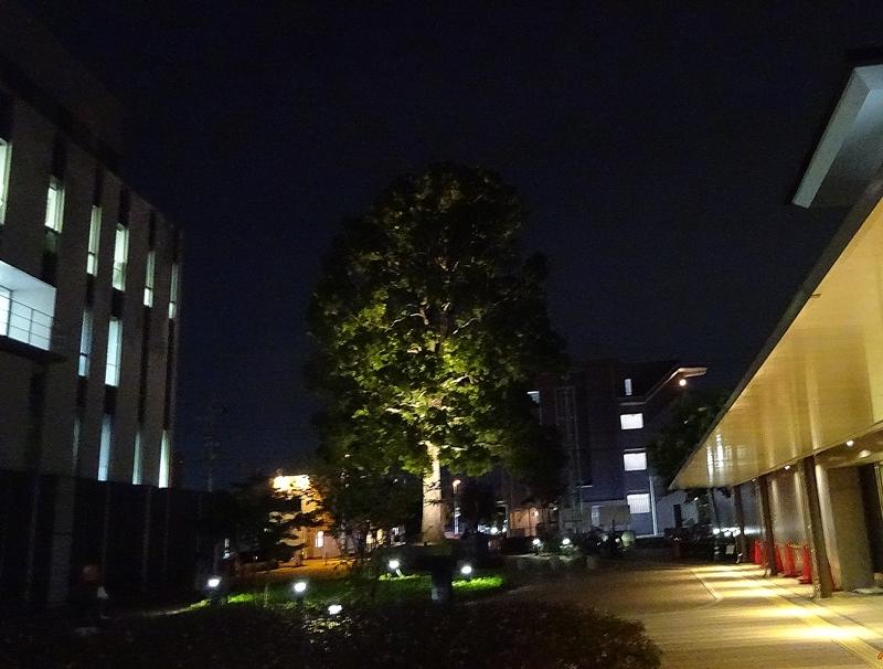 DSC09734夜の総合庁舎