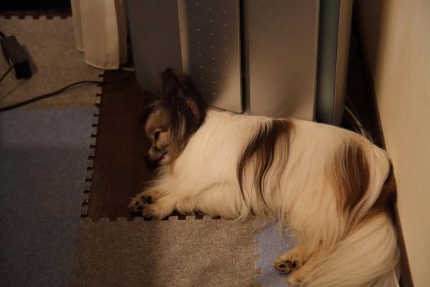 寝る犬00022331