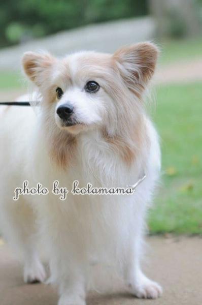 ドドギーズアイランド kotamamaIMG_0930