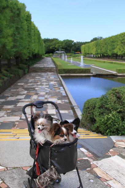 昭和記念公園 子供の森00025240