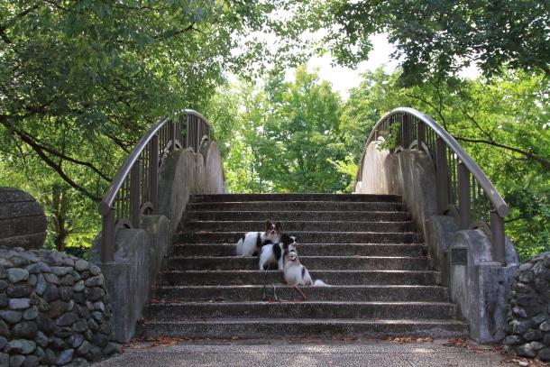 昭和記念公園 子供の森00025285
