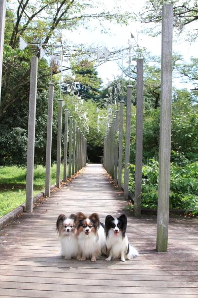 昭和記念公園 子供の森00025265