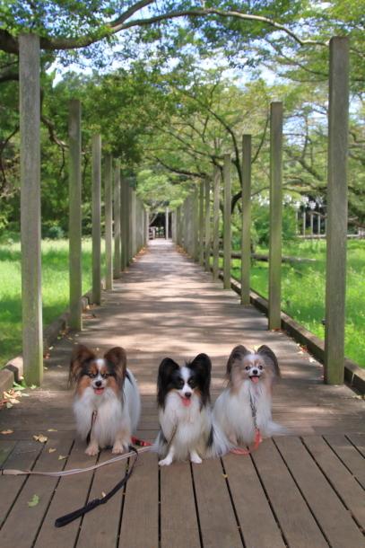 昭和記念公園 子供の森00025262