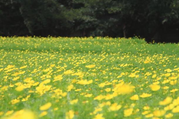 昭和記念公園 子供の森00025315