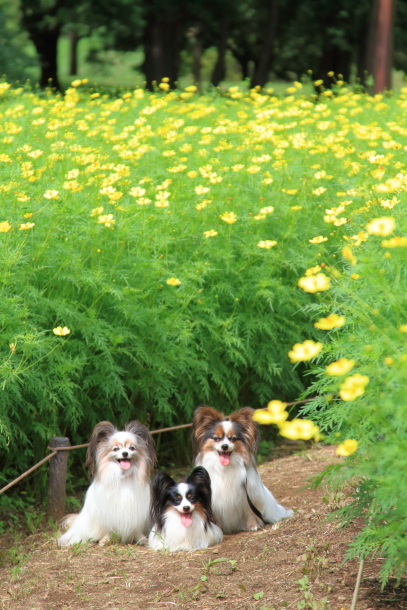 昭和記念公園 子供の森00025309