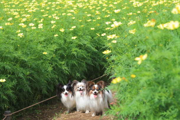 昭和記念公園 子供の森00025313