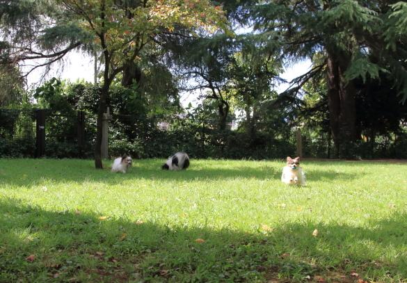 昭和記念公園 子供の森00025207