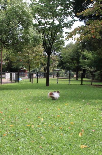 昭和記念公園 子供の森00025228