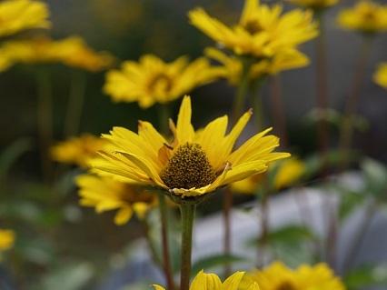 0816お花