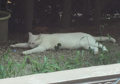 チビタの昼寝