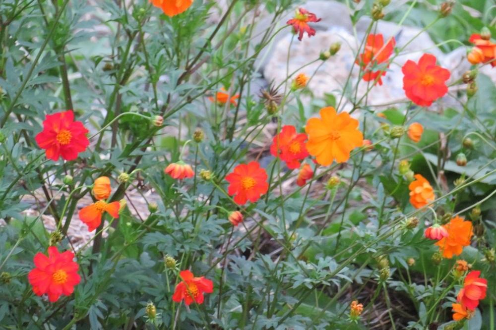 2夕方の花