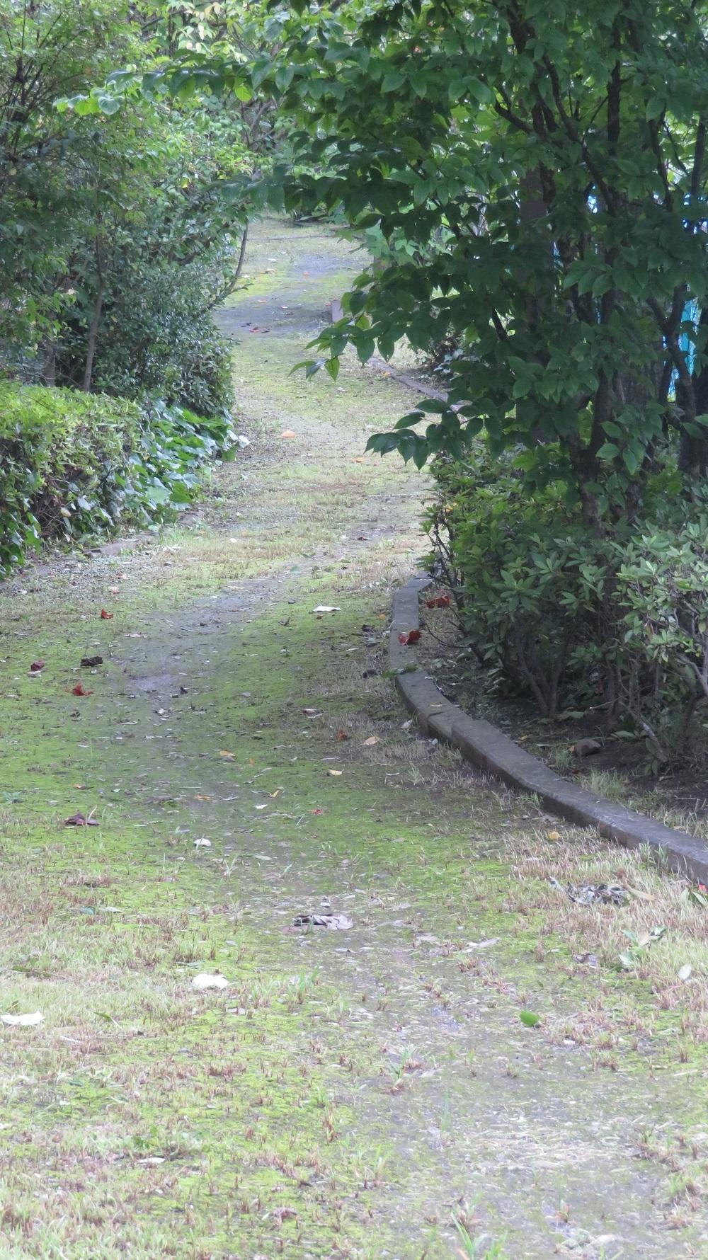 2バイパス脇の小道IMG_2393