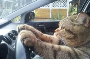 ねこドライブ