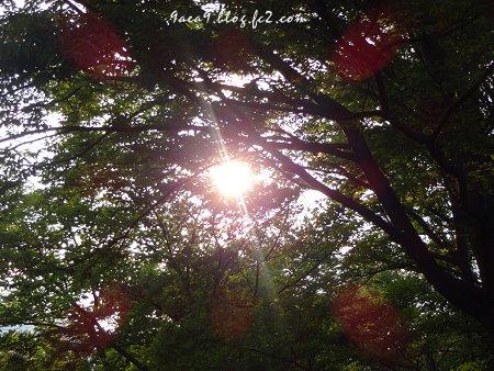 太陽を撮ると放射光が綺麗1
