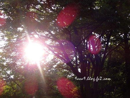 太陽を撮ると放射光が綺麗2