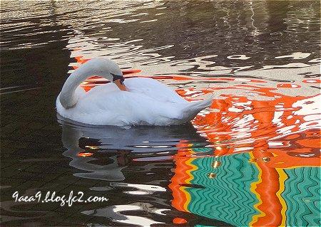 京都 六角堂の白鳥