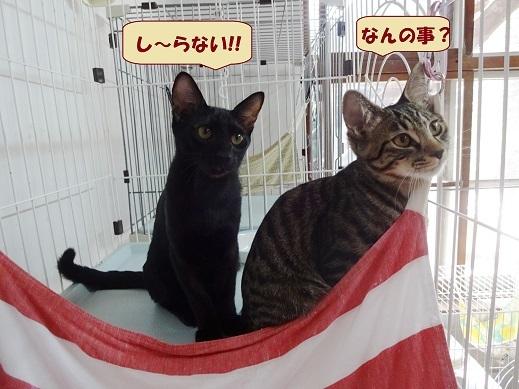黒あめ・ヨカ2