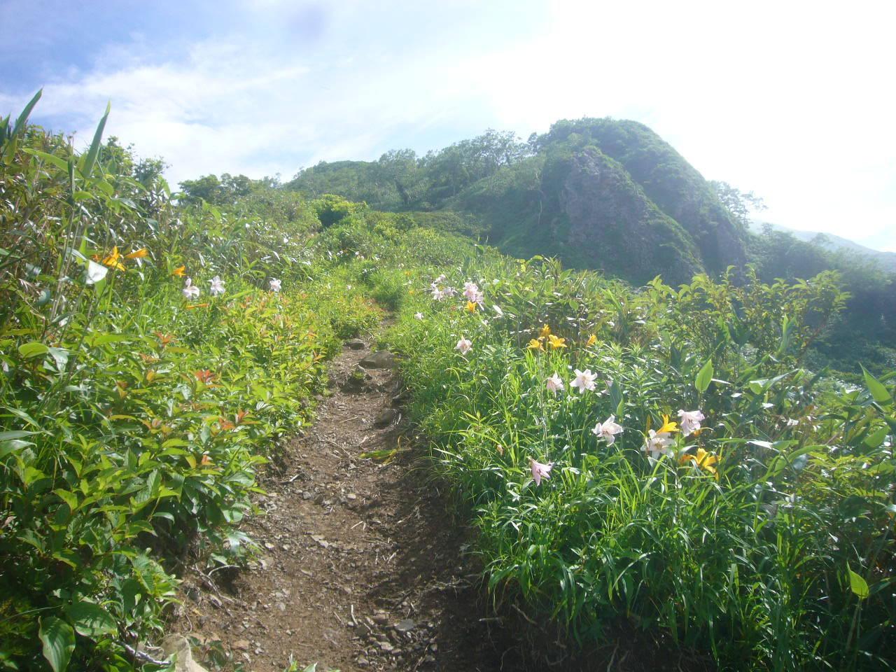 剣ヶ峰までの登り ササユリの道 H29.7.15