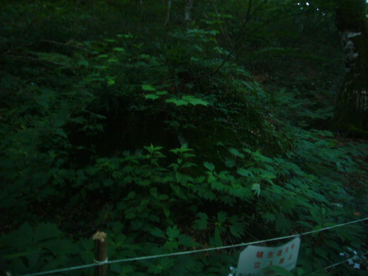 化け物と化した、サザレ岩 H29.8.03