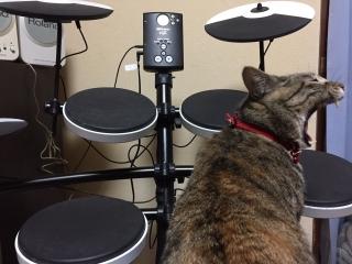 おにゃん ドラム 3