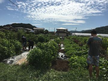 農園きらり九州の撮影12