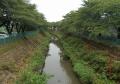昨日の砂川堀用水路(花影橋より)