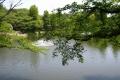 御伊勢塚公園のひょうたん池