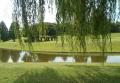柳越しに見るひょうたん池