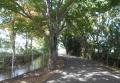 万葉の並木道(左が見沼用水路)