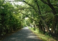 万葉の並木道