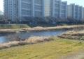 桜の頃の柳瀬川