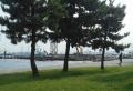 松林越しに見る清港埠頭