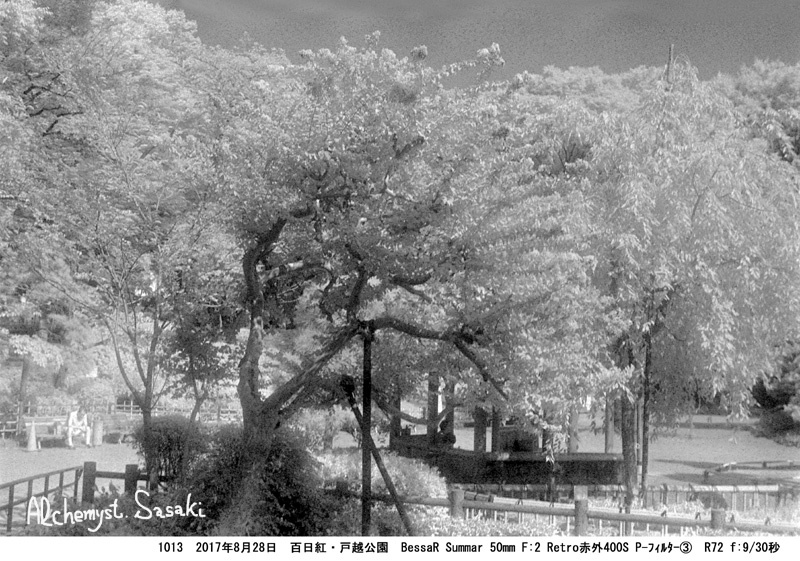 戸越公園の百日紅1013-11