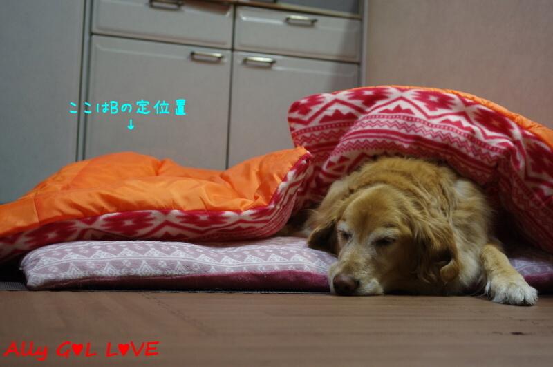 IMGP8824.jpg