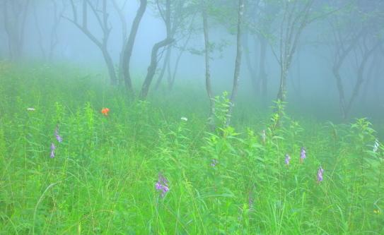 霧に霞む木立とお花畑