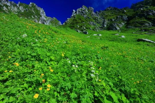 広大なお花畑と岩峰