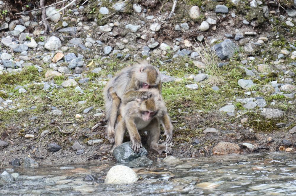 猿DSC_2183