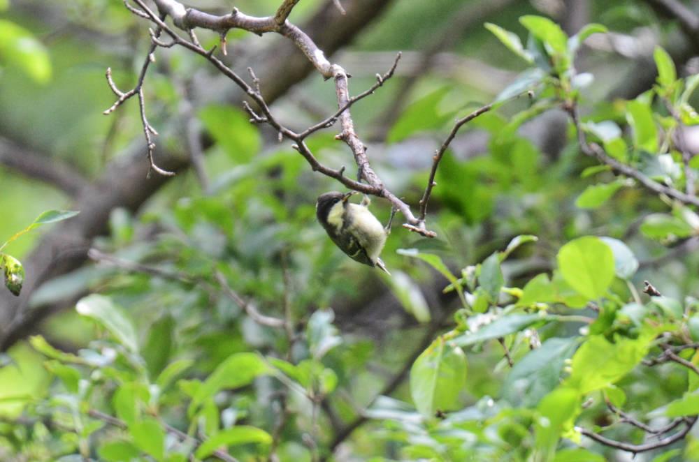 幼鳥DSC_2420