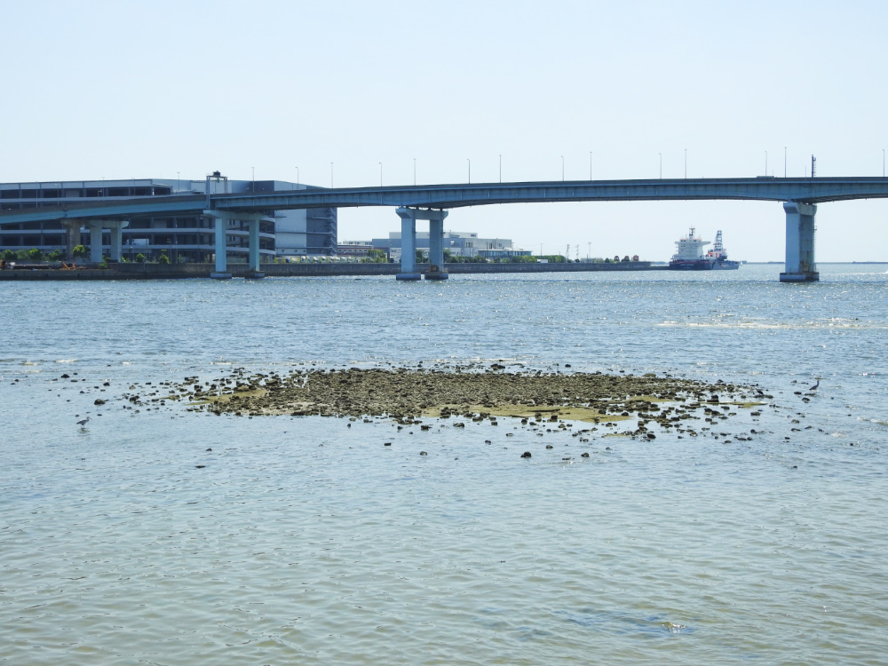 甲子園浜DSCN3416