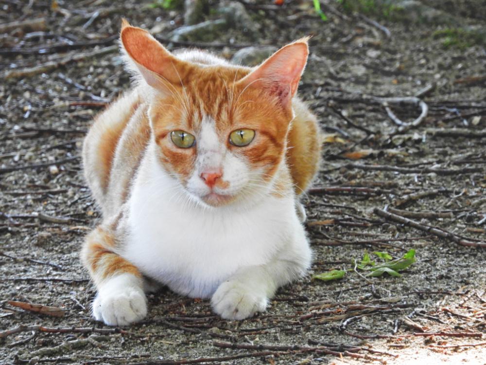 猫DSCN2385