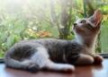 kotechai1_cats_DSC_2 (61)1s